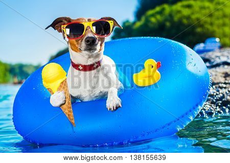 Dog Beach Summer Vacation