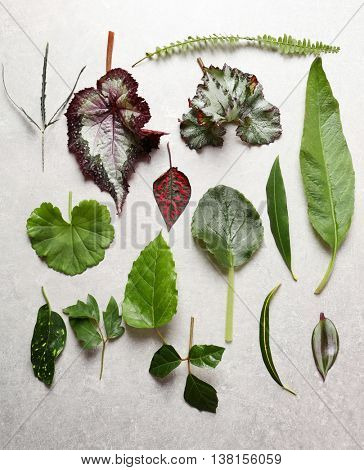 Different leaves on light table