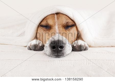 Sleeping Dog In Bed