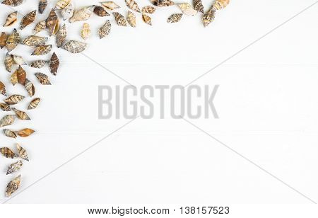 Seashells frame on a wooden white background