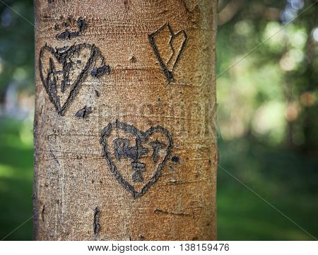 some carvings of hearts and initials of people in love on a tree in a park during sunset or sunrise on a hot summer day