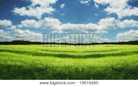 Green grassland and sky for background