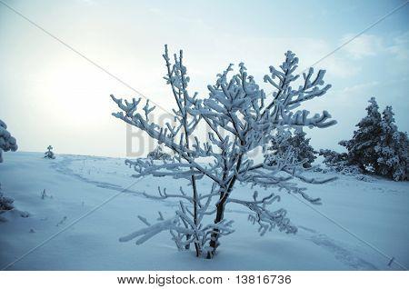 Christmas theme- frozen trees