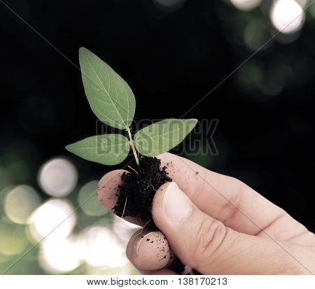 Hand holding plant on bokeh dark background