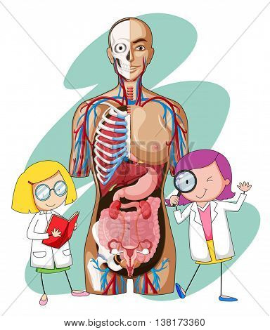 Doctors and human anatomy model illustration