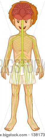 Little boy and nervous system illustration