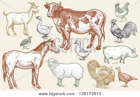 Farm animals. Goat cow horse sheep pig goose quail duck couple turkeys rooster hen on white background. Color illustration of isolated animals in the style of vintage engraving. Vector set.