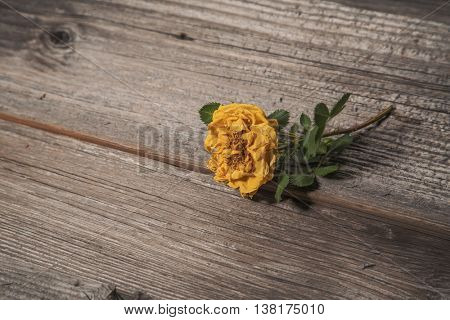 Dry yellow rose on old wooden background, scrapbook element