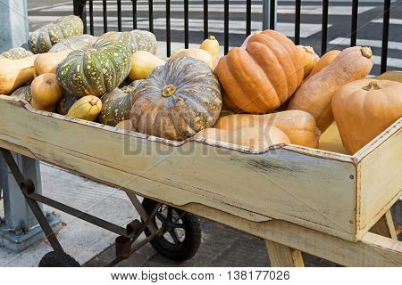 Large freshly harvested Japanese pumpkin, Golden nugget, butternut, winter squash variety in a wooden box during Autumn in Hahndorf, South Australia