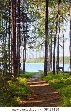 Footpath to the lake through a coniferous forest