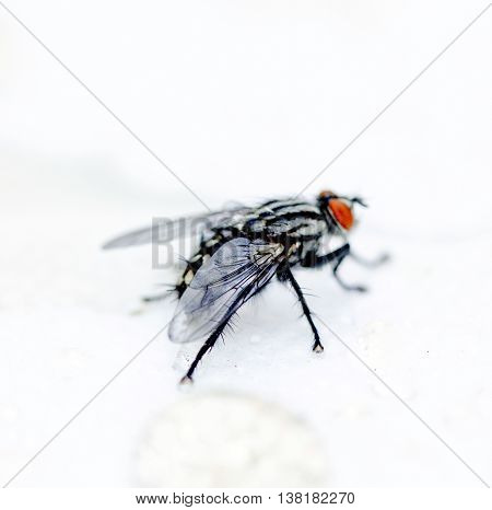 picture of a fly on white background