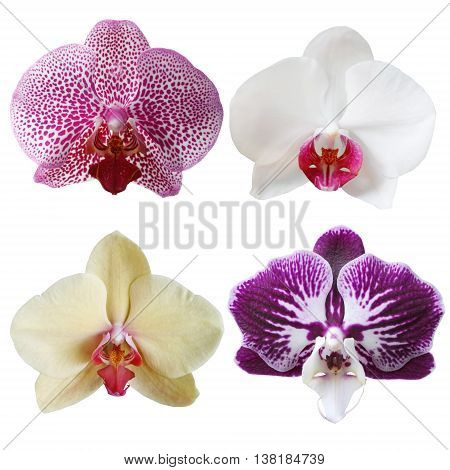Four different orchid flower isolated on white background