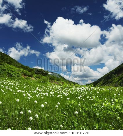 Summer green grassland in mountain