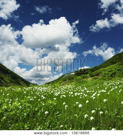 Summer green grassland in mountain