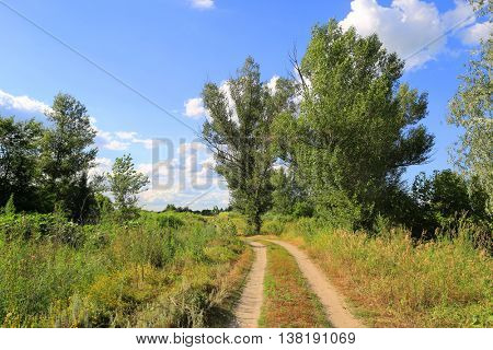 summer landscape with rut road in steppe
