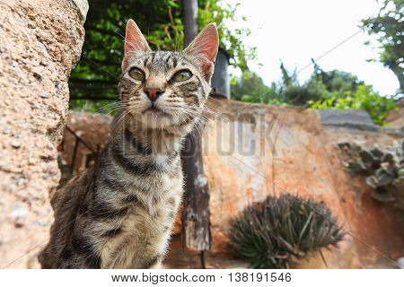 Young cat near the city stone wall. Island Crete. Greece