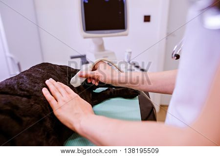 Dog having ultrasound scan in Veterinary clinic. Unrecognizable veterinarian examining black dog with sore stomach.