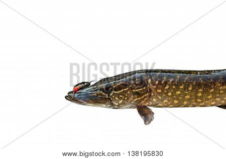 pike and a fishing hook on a white background