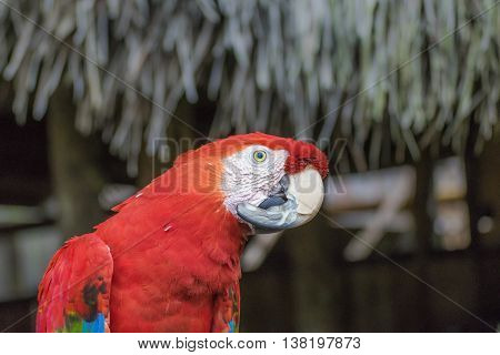 South American Colorful Parrot At Zoo