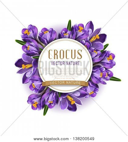 vector element for design. Blue crocuses with white card round and golden ribbon