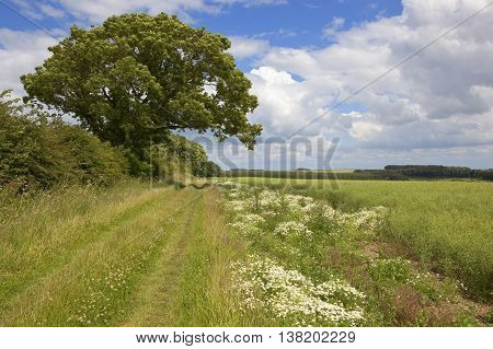 Country Bridleway With Wildflowers