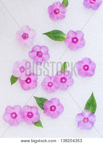 pink flowers creating amazing background