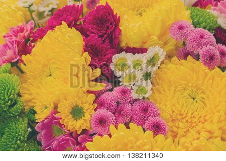 Bunch of yellow, pink, red and white mum flowers background, retro toned
