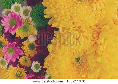 Background of yellow and pink mum flowers close up, retro toned