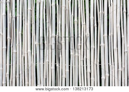 White bamboo fence texture background. Natural indian cane wall surface.