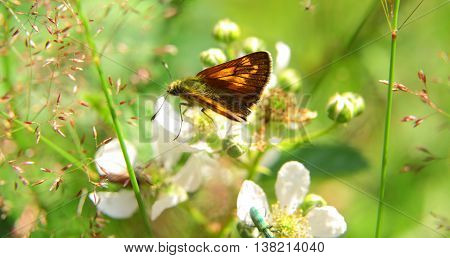 Closeup Of An Orange And Black Butterfly In Nature
