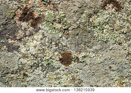 Ancient Stone Surface With Moss And Lichen