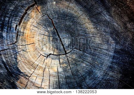 tree year ring - abstract natural background