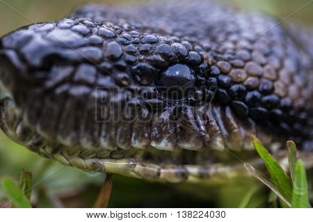 Close up shot of the head of snake on the green grass.