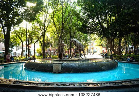 Coyotes Fountain In Coyoacan, Mexico City