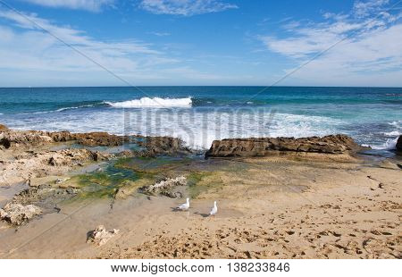 Sea gulls, limestone rock formations and Indian Ocean waves with seascape under a blue sky at Penguin Island in Rockingham, Western Australia.