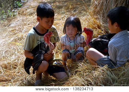 BAC Ninh, Vietnam, March 14, 2016 Children's groups, rural Bac Ninh, Vietnam, fun cockfighting