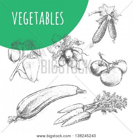Vegetables vector set. Hand drawn pencil sketch illustration. Fresh farm vegetarian food. Vegan design for grocery store, food market, product shop. Carrot, cucumber, zucchini, tomato, radish, pepper.