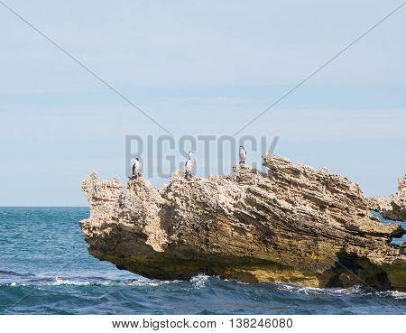 Limestone rock formations with three large black and white Australian Pied Cormorants in the turquoise Indian Ocean waters under a cloudy sky in Rockingham, Western Australia.