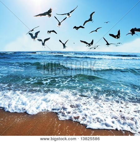 Sea gulls on coast