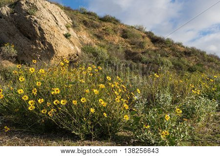 Wildflowers In Mountain Meadow