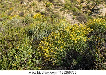 Yellow Wildflowers On Hillside