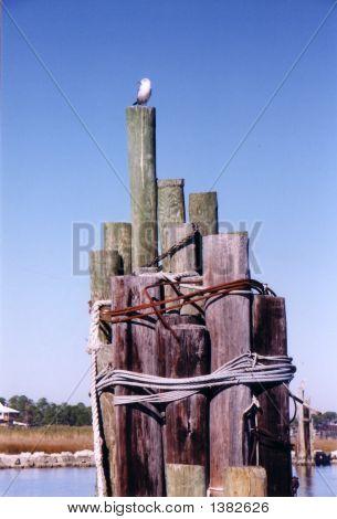 Boat Dock  Seagull