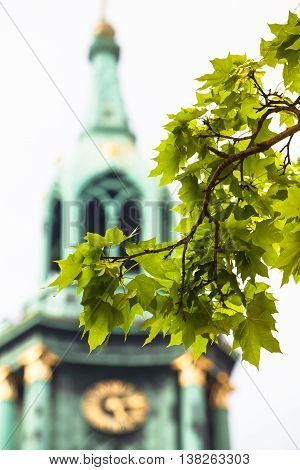 Twigs of an maple tree with green leaves in front of a tall church tower at a summer afternoon