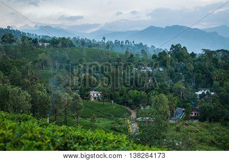 The highland tea plantations of Sri Lanka near Kandy