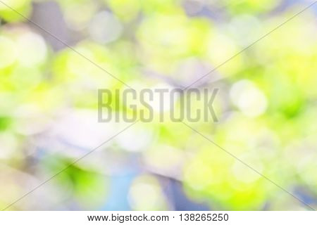 Summer background of blurred green grass leaves and blue sky with patches of sunlight
