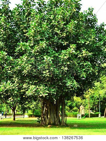 Tree of Life, Banyan Tree, Make trees your religion for they give and give asking nothing in return, Garden of Five Senses