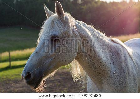Arabian Horse in partial sunlight - romantic atmosphere