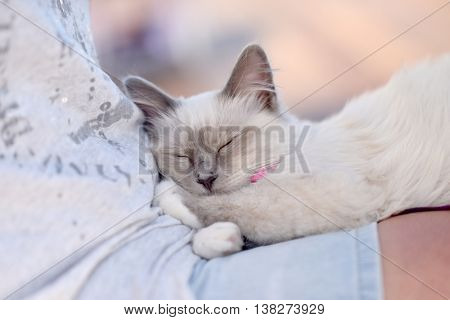 Cat relaxing on people lap