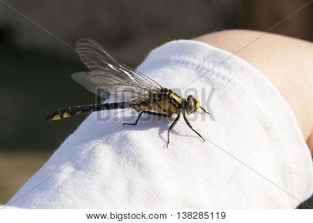 Dragonfly on hand insect with wings photo