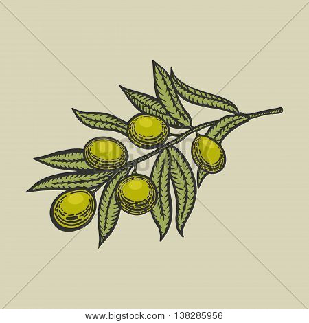 Olive branch engraving style vector illustration. Scratch board style imitation